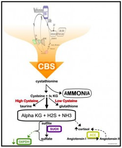 Diagram of CBS methylation James C. Roberts, MD James C. Roberts, MD CBS methylation