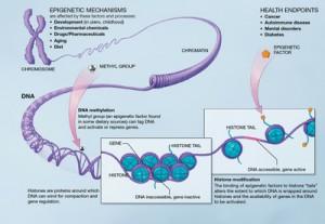Illustration of Epigenetic Mechanism Genetics Genetics Epigenetics