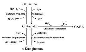 glutamate James C. Roberts, MD James C. Roberts, MD glutamate