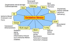 oxidative stress chart Oxidative stress in developmental brain disorders. Oxidative stress in developmental brain disorders. oxidative stress chart