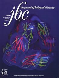 Journal of Biological Chemistry 2 {focus_keyword} Oxidation of the tryptophan 32 residue of human superoxide dismutase 1 caused by its bicarbonate-dependent peroxidase activity triggers the non-amyloid aggregation of the enzyme. Journal of Biological Chemistry 2