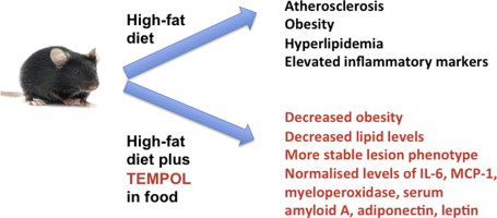 Tempol obesity {focus_keyword} TEMPOL had a significant positive impact on body mass, atherosclerosis, hyperlipidaemia and inflammation Tempol obesity